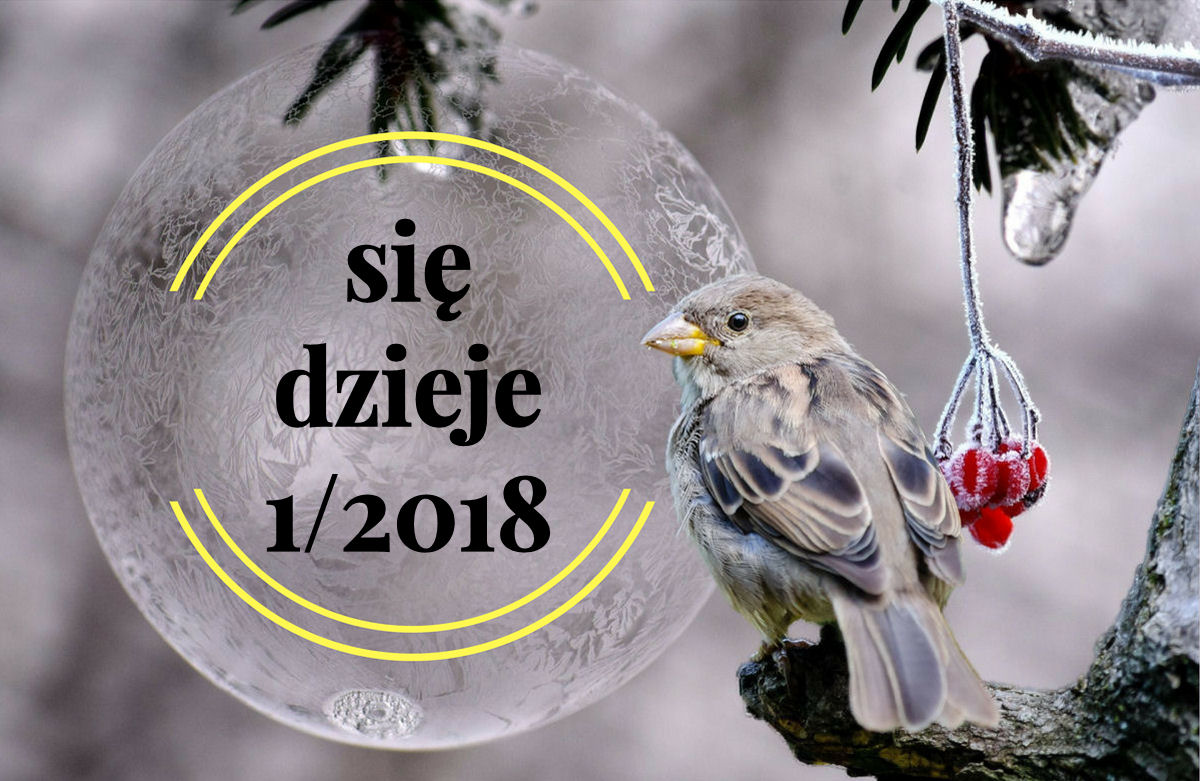 sierysuje.pl inspirujący blog kreatywny kaligrafia akwarele
