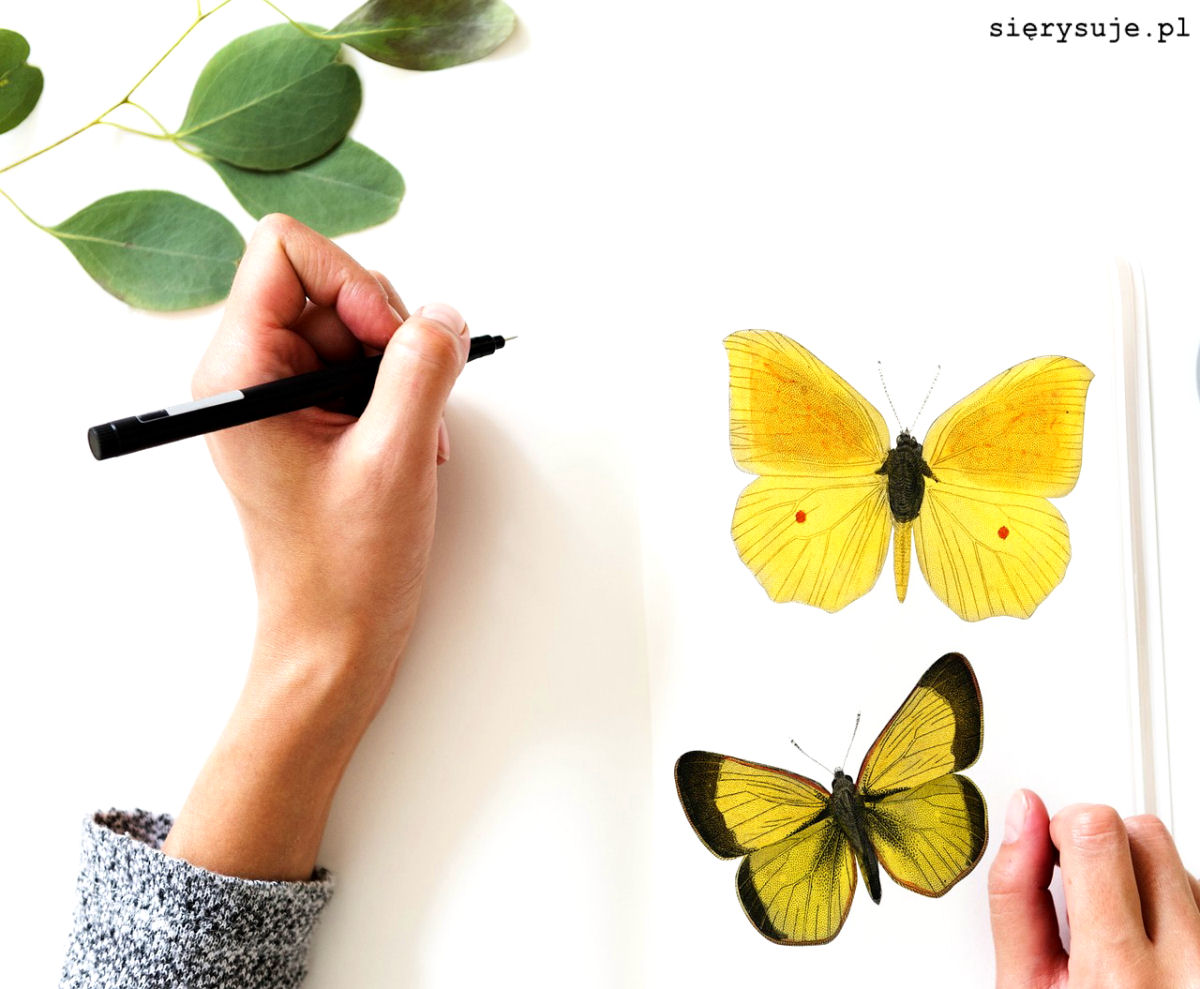 sierysuje.pl jak się nauczyć rysować akwarele natura