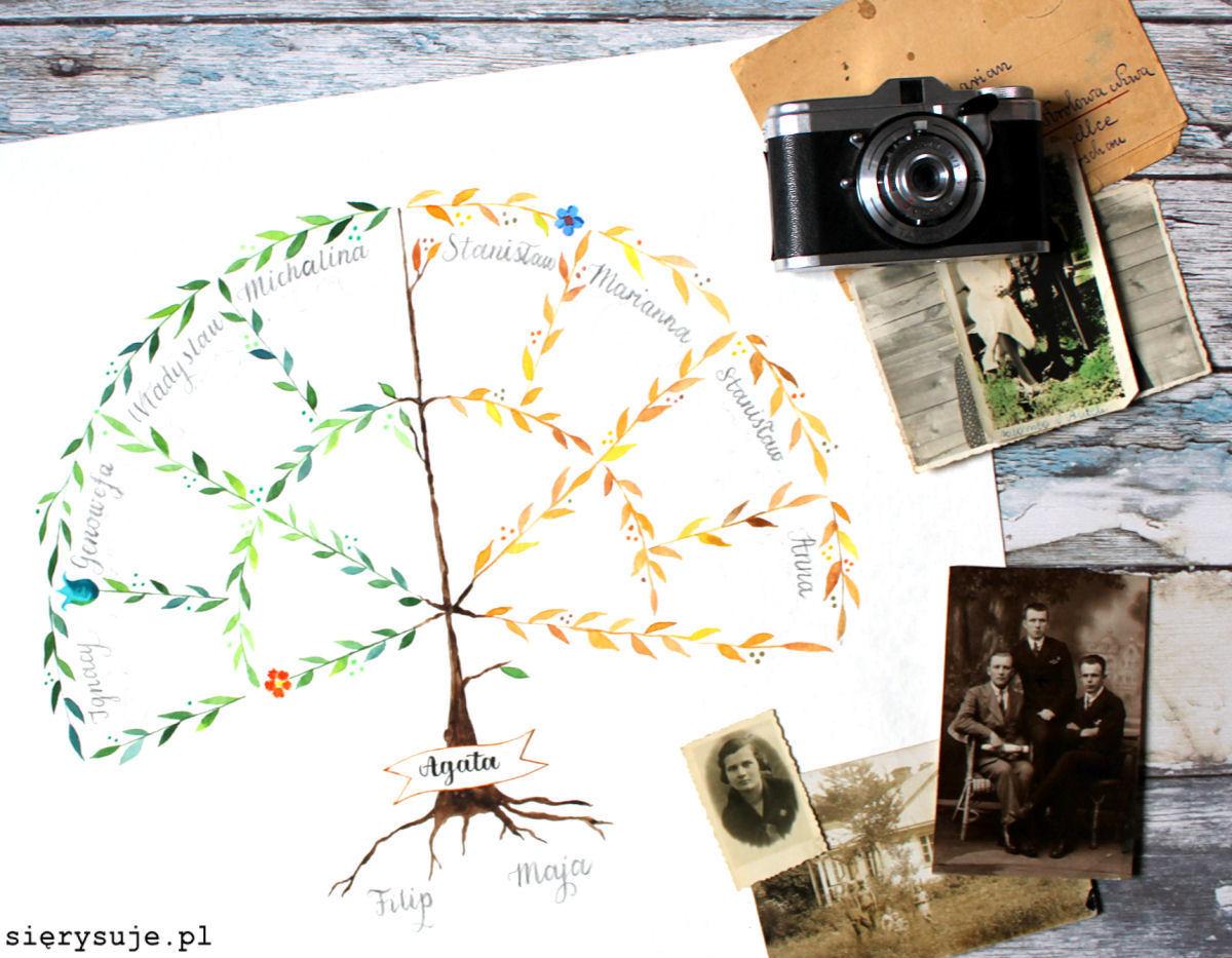 sierysuje.pl drzewo genealogiczne wywód przodków
