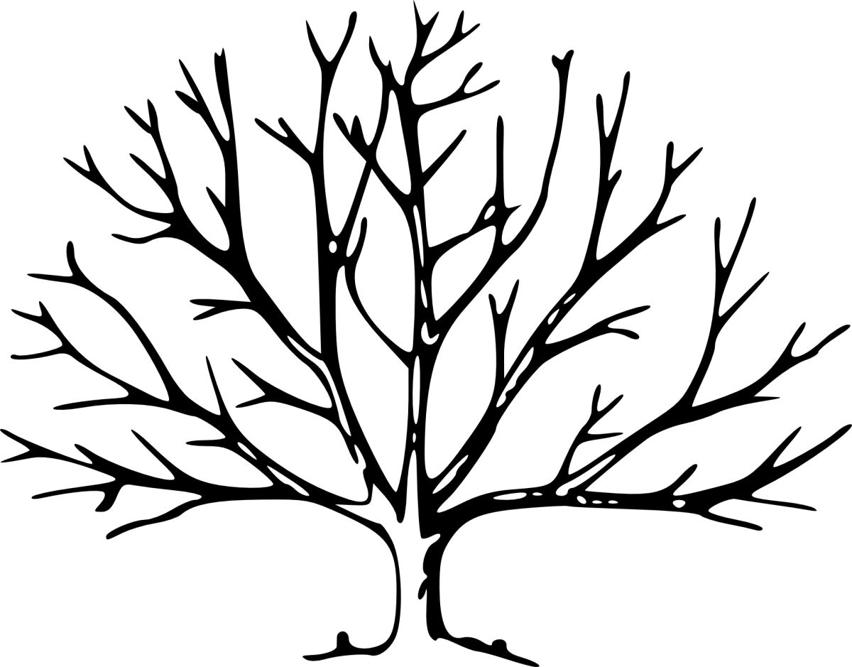 sierysuje.pl jak narysować drzewo genealogiczne
