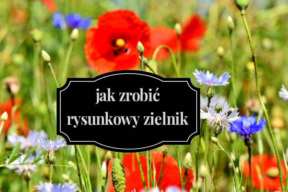 sierysuje.pl zielnik